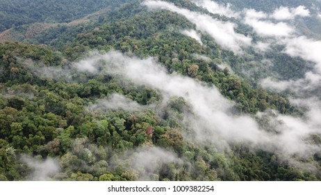 Rainforest. Aerial photo of rain forest hillside landscape and clouds