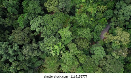 rainforest aerial view from above