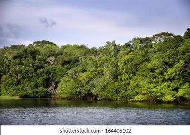 rainforest in Amazon, in  Brazil