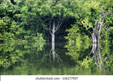 rainforest in Amazon, Manaus, Brazil