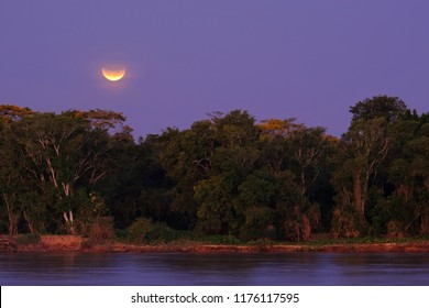 Rainforest with the Blood Moon right afrer lunar eclipse, Cuiaba River, Porto Jofre, Pantanal, Mato Grosso do Sul, Brazil, South America