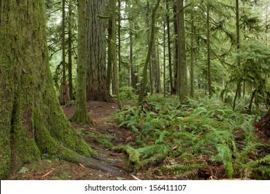 Rainforest in British Columbia, Canada
