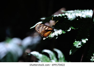 Rainforest Butterfly