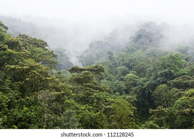 Rainforest covered with fog