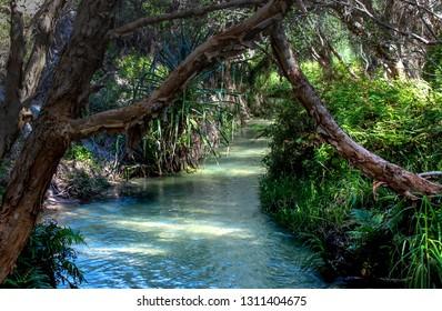 Rainforest creek with blue water called eli creek in australia