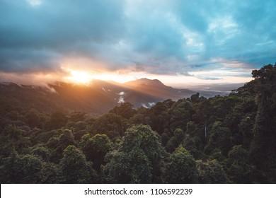 Rainforest of Dorrigo National Park, New South Wales, Australia