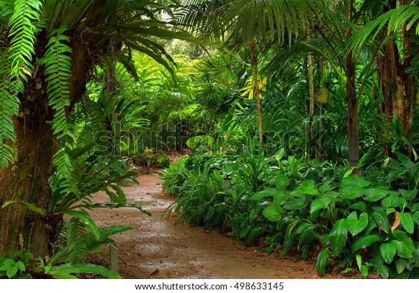 Rainforest Garden Path North Queensland Australia Stock Photo