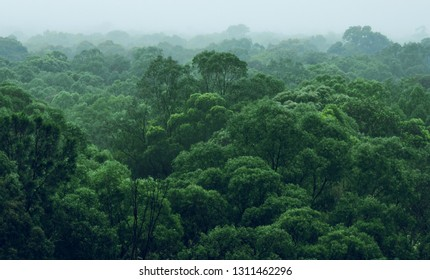 Rainforest jungle aerial view
