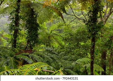rainforest at Lake Morris, Queensland, Australia
