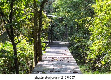 Rainforest landscape at Kinabatangan river