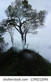 rainforest with mist