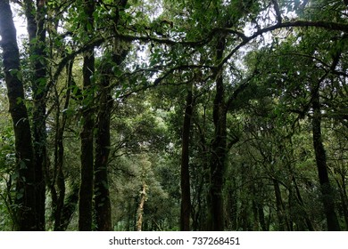 Rainforest, mixed forest, and pine forest in Doi Inthanon National Park, Chiangmai Thailand