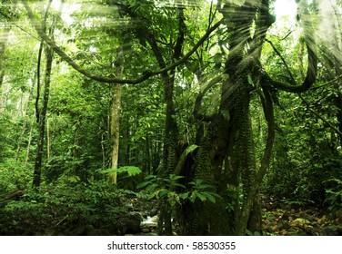 rainforest with morning sunlight