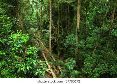 rainforest in New South Wales, Australia