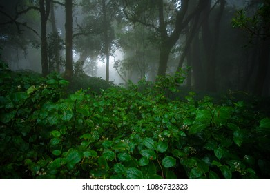 Rainforest in the north of Thailand.