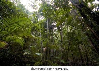 Rainforest on Fraser Island, Queensland, Australia