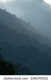 Rainforest on the mountains of Ilhabela island, Brazil