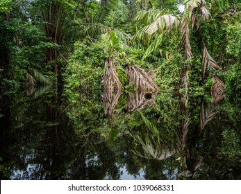 Rainforest Reflections, Canals of Tortuguero National Park, Costa Rica