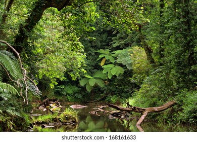 rainforest scenery with creek in North Queensland, Australia