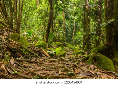 The rainforest of the  Seychelles islands