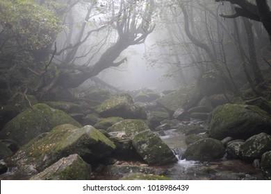 Rainforest Shiratani Trail Yakushima