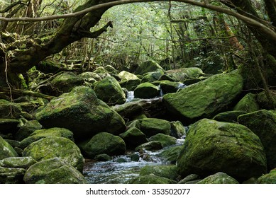 rainforest Shiratani Unsuikyo yakushima kagoshima prefecture japan