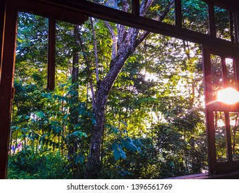 Rainforest summer view from a window of a abandoned house in Amazonia, Brazil.