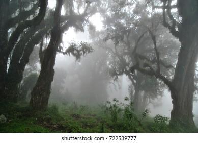 Rainforest in Tanzania.