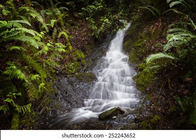 Rainforest Waterfall. A lovely waterfall cascading down the steep rainforest environment in the San Juan Islands of Puget Sound, Washington State, USA.