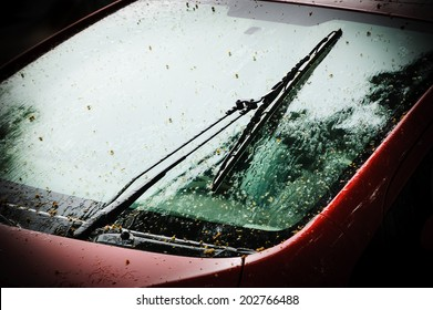 Raining. Wet red car  with fallen tree seeds. Selective focus on the windscreen wiper. Dark toned image.