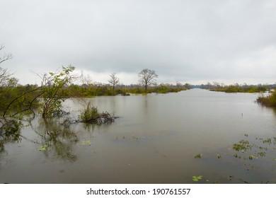 rainning landscape