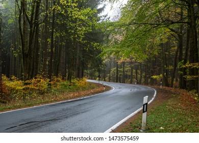 Rain-slicked roads in the forest, Season, autumn, danger of Slipping