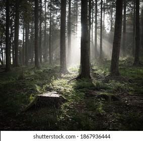 Rainstorm in an English Woodland