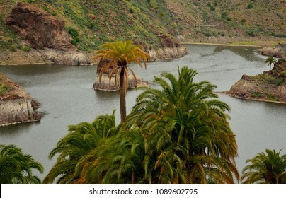 Rainwater dam and palm trees in foreground, La sorrueda, Santa lucia, Canary islands
