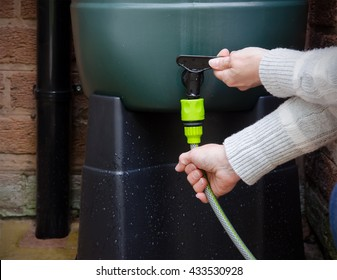 rainwater tank or water butt, woman connecting a hose to a rain collector to water garden. Landscape.