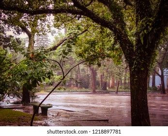 Rainy afternoon in the Ibirapuera Park among flowers and trees