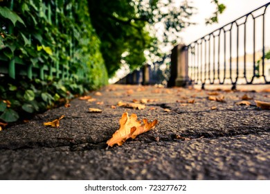 Rainy autumn day in the city, an alley in the park running along the embankment with a lying oak leaf. Close up view from the level of granite pavement, image in the yellow-blue toning