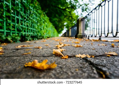 Rainy autumn day in the city, the avenue in the park strewn with oak leaves passing along the embankment. Close up view from the level of granite pavement