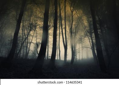 rainy dark forest at sunset