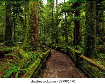 A rainy day at Cathedral Grove near Tofino, Vancouver Island, British Columbia
