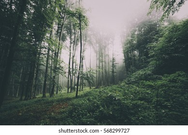 Rainy day in Natural green misty forest