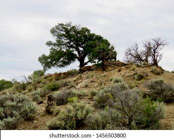 Rainy day on High Desert Trail, No 3 Gallup NM, 5 Aug 2016