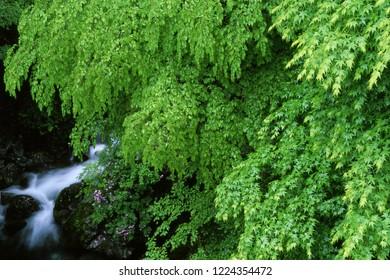 Rainy fresh green