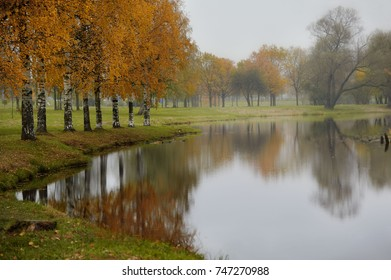 Rainy landscape in autumn, birch trees and reflection in water