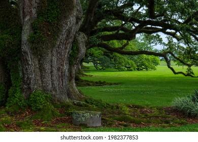 Rainy Louisiana morning under majestic oaks. - Shutterstock ID 1982377853