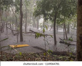 Rainy season in the Amazon jungle. Heavy rain over the Jaguar's lagoon. Brazil. South America.