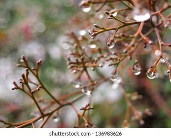 Rainy twigs
