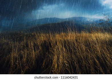 rainy weather landscape with storm clouds in the sky and grass in wind