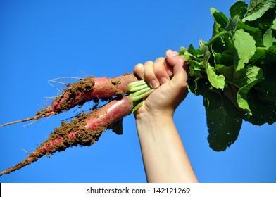raise your radish
