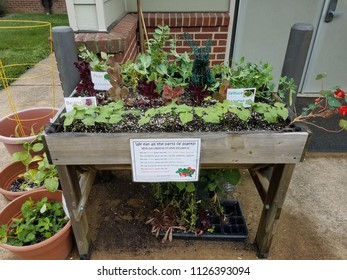 raised bed garden with vegetables labelled